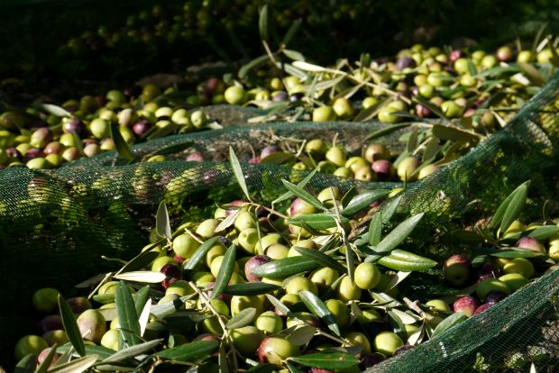 Photo: olive-oils@Flickr