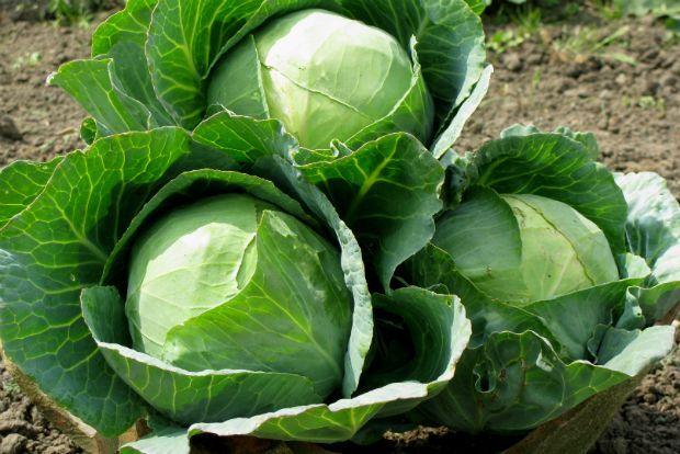 Image result for λαχανο φωτο