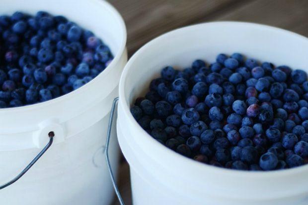 Photo: gardenista.com